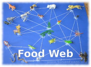 Learn how the food web is a part of animal relationships
