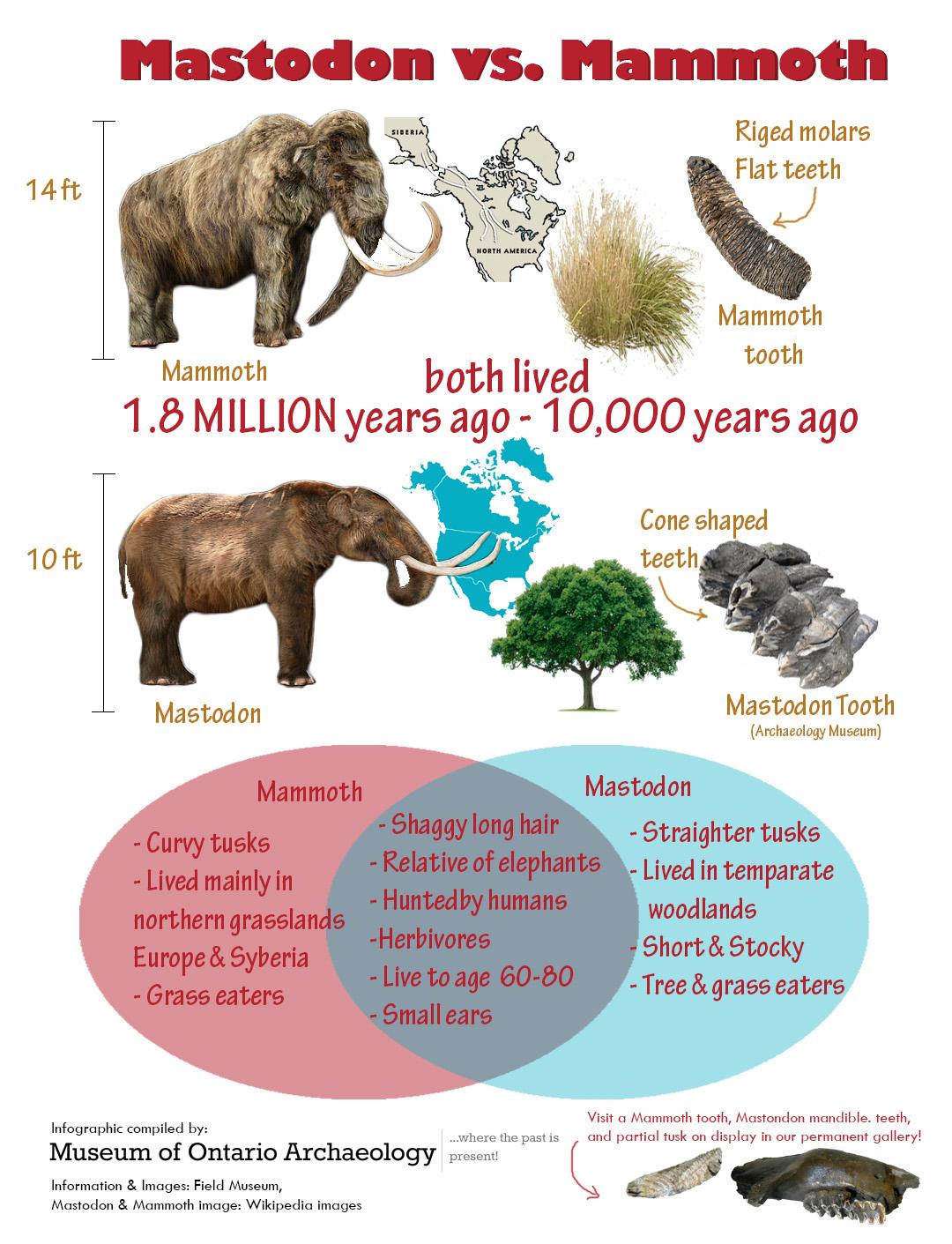 mammothsvsmastadon