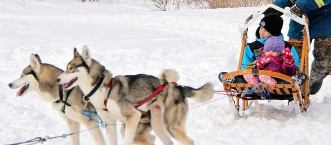 Huskies pulling children in a dogsled