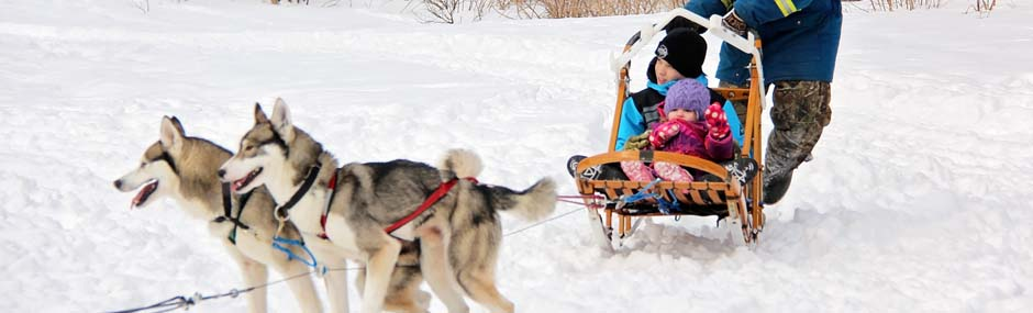 Snowsnae dogs, Huskies pulling sled