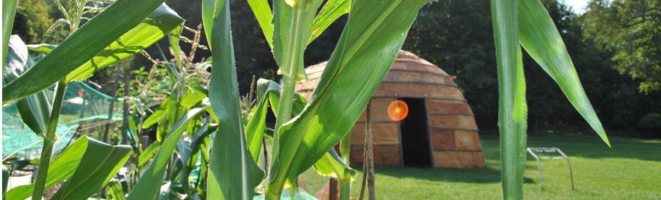 Longhouse corn