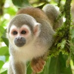 Animals to discover on the March Break Adventure - Monkey